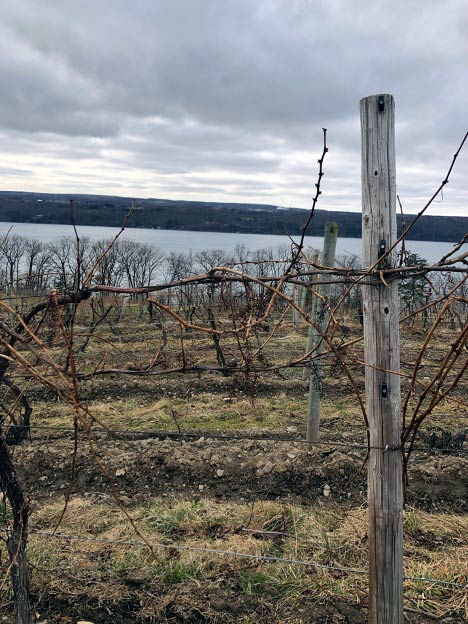 Vineyards overlooking Seneca Lake
