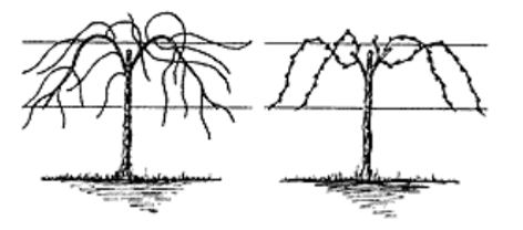 Drawing of trellis system.